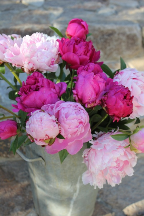 bucket of peonies