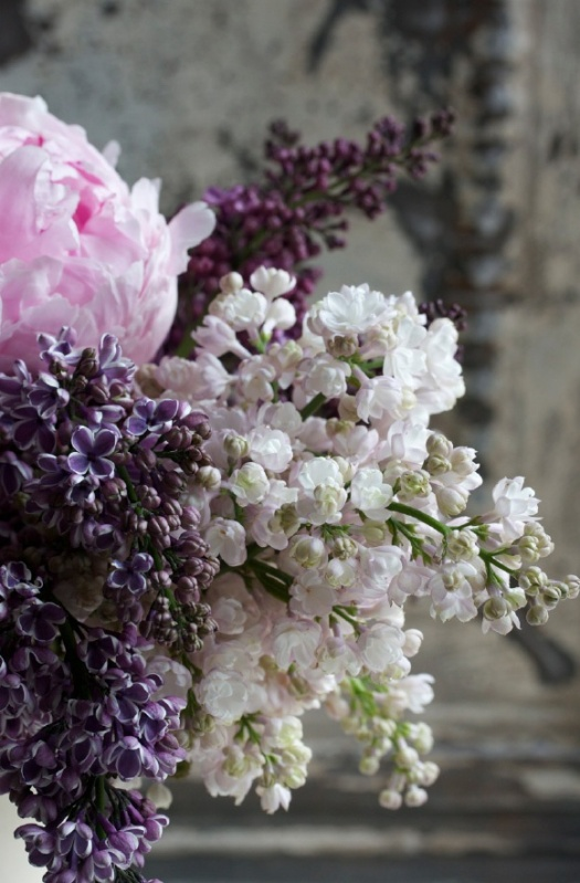 peonies and lilacs